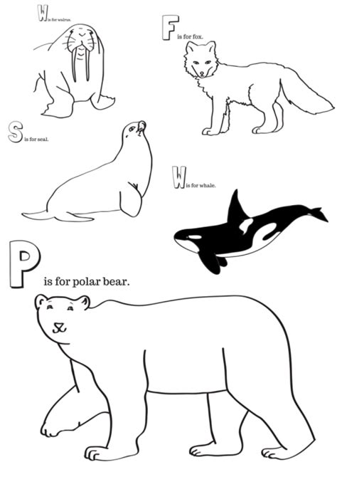 arctic animals printable coloring pages arctic best free
