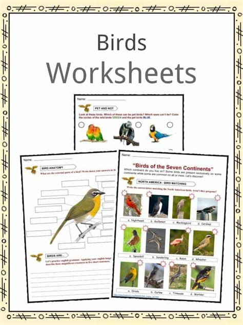 printable bird quiz cute print animal adaptations animals worksheets for kids