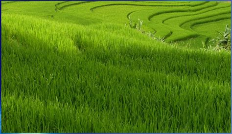 imagenes prados verdes adi 211 s a la cuota l 193 ctea galiciaunica