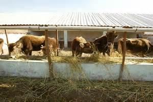 cobertizo ovino culminan construcci 211 n de doce cobertizos para proteger el