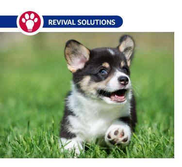 newborn puppy diarrhea treating diarrhea in newborn puppies or kittens