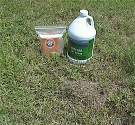 ants in home remedy post powder beetles how to