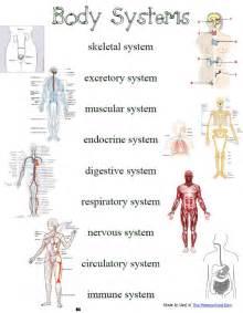 laurella j comparative anatomy