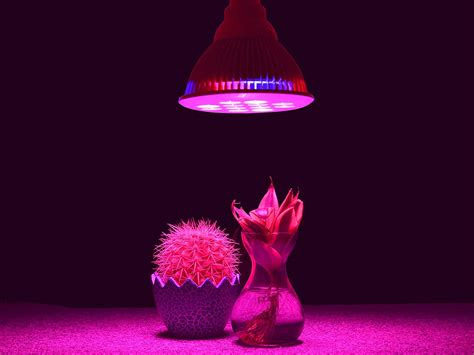 Best Grow Lights by Best Led Grow Lights 2017 Reviews Guide On The Market