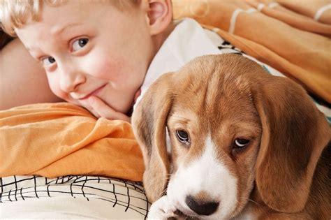 cani per appartamento cani per appartamento la scelta giusta 232 variata sul