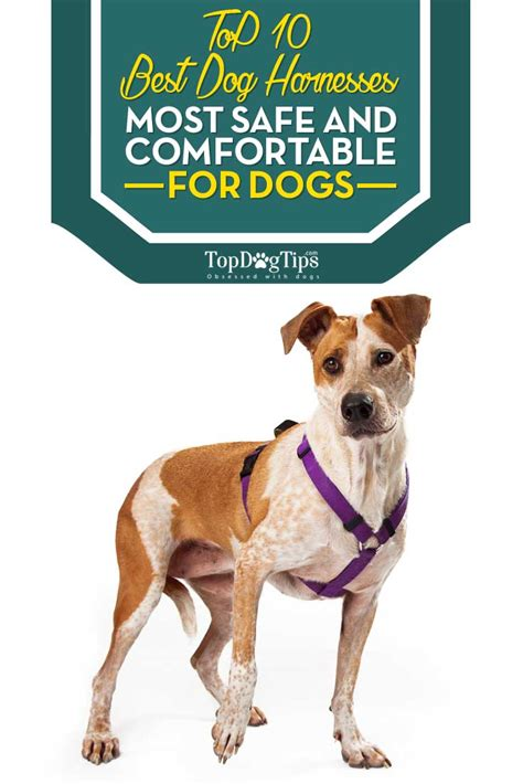 best harness for dogs best harness review of 10 pet harnesses for dogs 2018