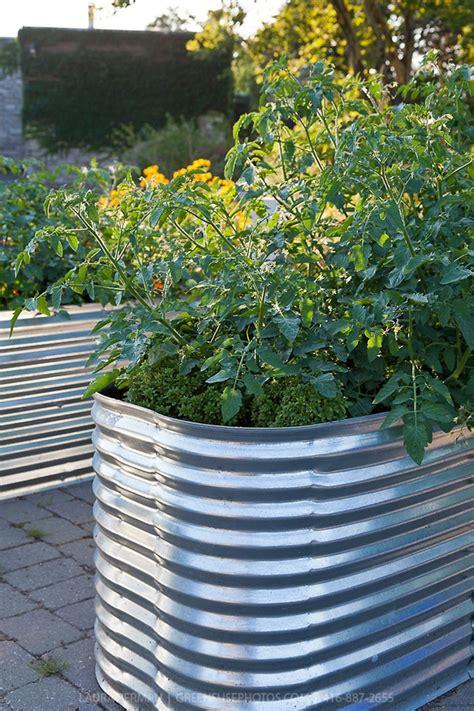 galvanized garden containers pin by catherine boldt on galvanized garden