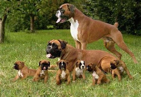best breed for best dogs for breeds for families with children k9rl