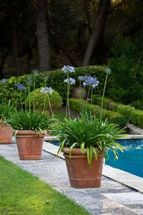 1000 images about pool area on pinterest pool plants