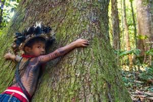 l solutions la d 233 forestation le fl 233 au de la for 234 t amazonienne