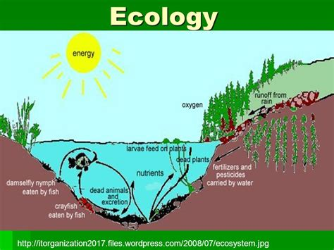 free ecology ppt themes ecology ppt download