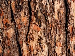 wallpapers tree bark wallpapers