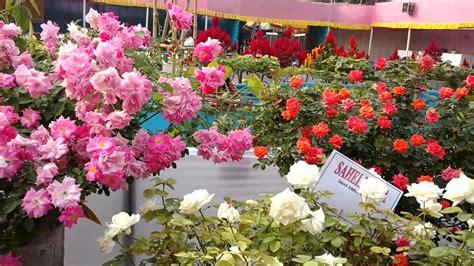 beautiful rose garden flower showpart  youtube