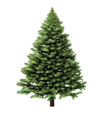 christmas tree recycling issaquah carnation recology cleanscapes