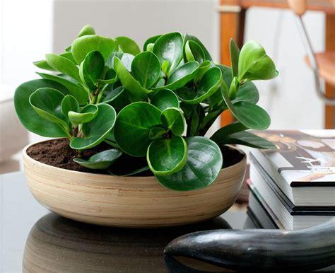 plants     coffee table