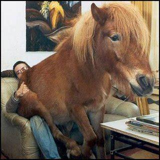 cavallo seduto file cavallo seduto su un uomo jpg nonciclopedia