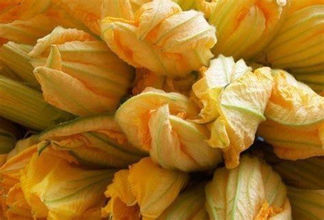 fiori di zucchina fiori di zucchina in the wind