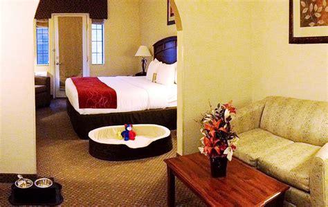 pet room pet friendly comfort suites hotel golden and evergreen co