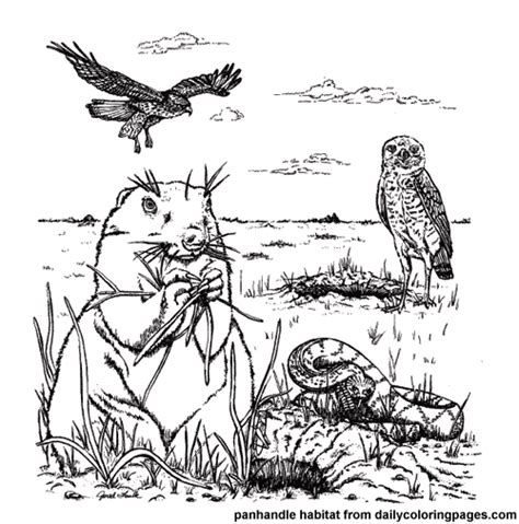 7 Best Images Of Animal Habitats Coloring Printables Animal Habitat Coloring Pages