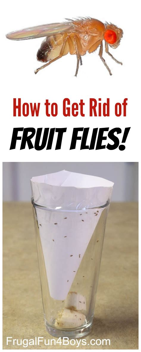how do you get rid of flies in your backyard how to get rid of fruit flies frugal fun for boys and girls