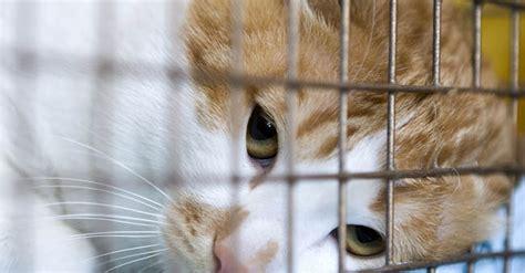 gatto in gabbia gatti destinati alle cucine sequestrati tra cina e