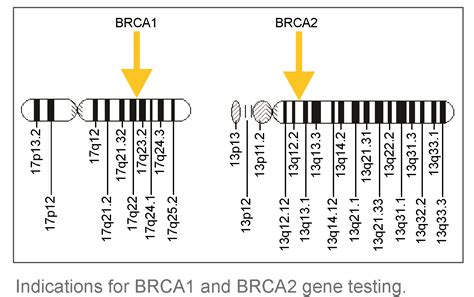 understanding brca living with the breast cancer gene books brca1 gene and breast cancer