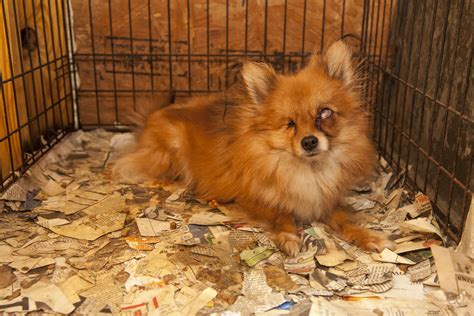 puppies store breaking aspca rescues more than 130 dogs from alabama puppy mill no pet store puppies