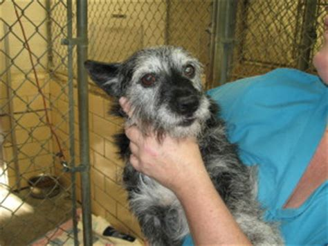 tuscarawas county pound tiny wags tiny tails adoption page