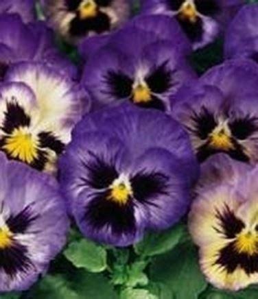 fiori di stagione febbraio fiori di stagione fiori in giardino riconoscere i