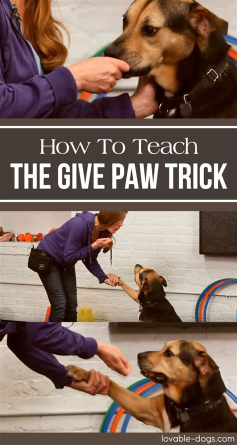 how to your to give paw lovable dogs how to teach your the give paw trick lovable dogs