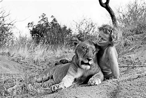 film elsa the lioness born free a film review my bad side