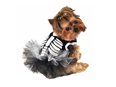 pet halloween costumes  ideas  dogs  cats