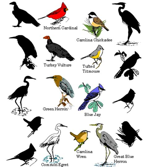 10 08 11 types of birds