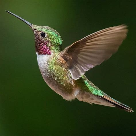 473 best hummers images on pinterest beautiful birds