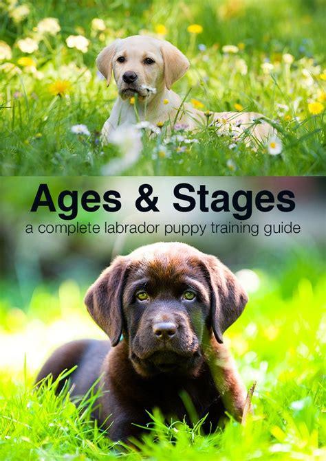 8 week puppy schedule top 25 best labrador puppy ideas on a puppy