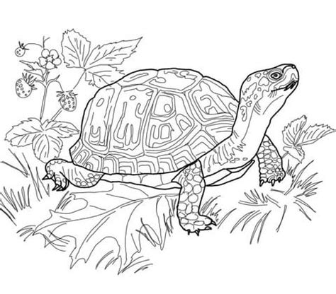 snapping turtle coloring pages coloring pages