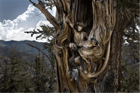 a living tree living tree