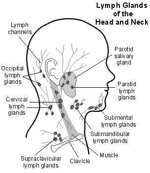 neck lymph node locations diagram swollen lymph glands lymph nodes causes treatment