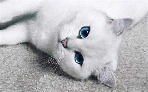 beautiful kittens cat with the most stunningly beautiful becomes