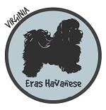 havanese virginia havanese breeders in virginia havanese puppies for sale va