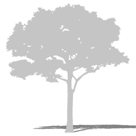 Tree silhouette 12 3D Model   FormFonts 3D Models & Textures