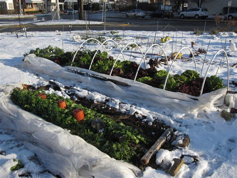 Vegetable Garden In Winter What To Plant In Your Winter Vegetable Garden Pacific
