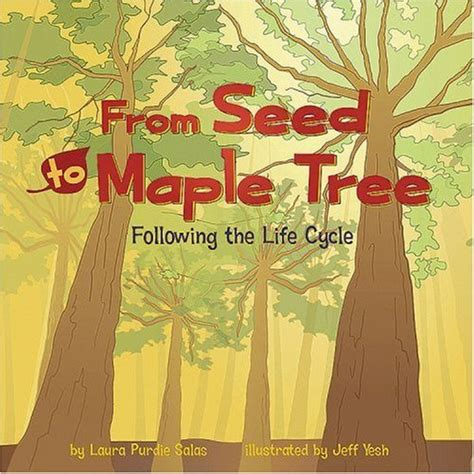 maple tree lifespan a tree grows in brookline storytime archives