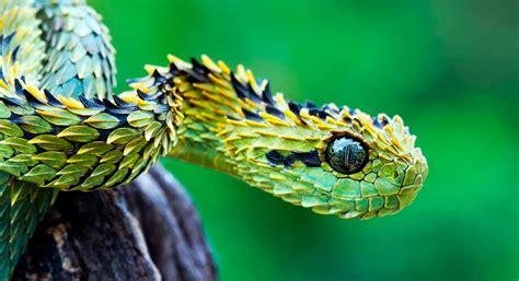 imagenes asombrosas de serpientes serpientes tipos especies gu 237 as fotos y recursos