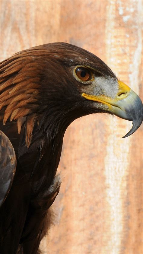 wallpaper iphone eagle golden eagle iphone 6s wallpapers hd