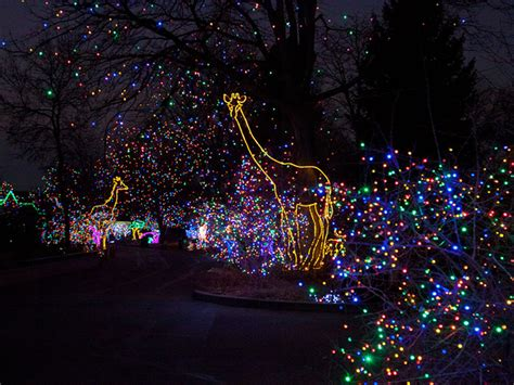 Gallery Discover The Magic Of Zoo Lights At The Denver Denver Zoo Zoo Lights