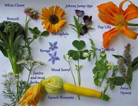 Edible Flower Garden Summer S Edible Flowers Growingstories