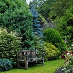 evergreen landscaping evergreen privacy hedge color and textural