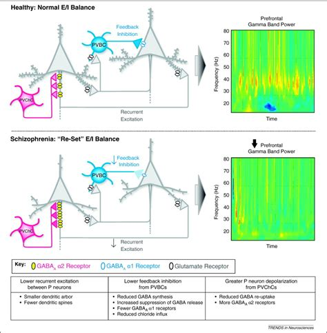 Chandelier Cells Cortical Parvalbumin Interneurons And Cognitive