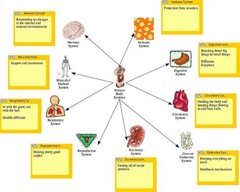 diagram human diagram of human diagram site